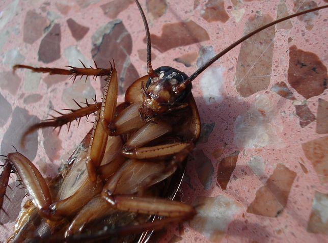 W zoo możesz nazwać karalucha wybranym imieniem
