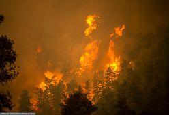 Pożary w Grecji. Wyspa zamienia się w proch. Trwa dramatyczna ewakuacja