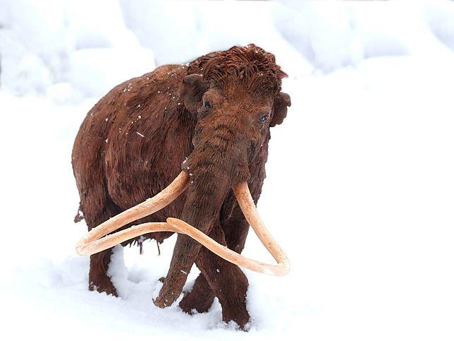 Szczątki są dowodem na to, że owłosione giganty w czasach prehistorycznych żyły również na tych terenach