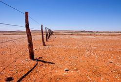 Groźne upały w Australii. Mogą paść kolejne rekordy