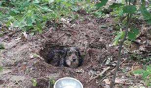 Pies został zakopany w półmetrowym dole