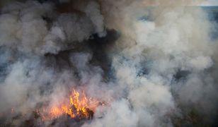 Teksas walczy z gigantycznymi pożarami - zobacz film