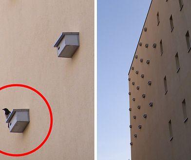 Drewniane schronienia dla jerzyków zdobią elewacje budynków na Pradze-Północ