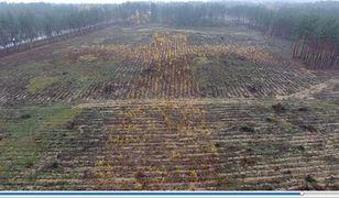"""Podlaskie. Lasy Państwowe pochwaliły się pierwszymi efektami """"nietypowego odnowienia"""""""