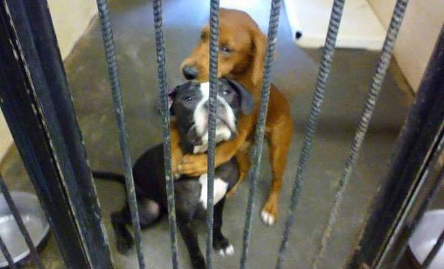 Zdjęcie uratowało psy ze schroniska przed śmiercią