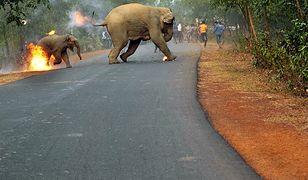 Indie słyną ze złego traktowania zwierząt.