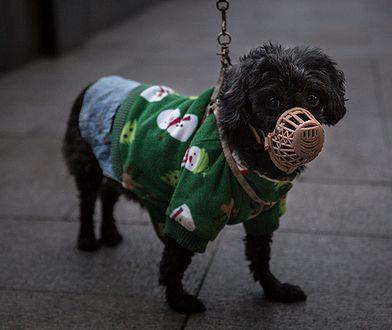 Pies został poddany kwarantannie w Hongkongu.