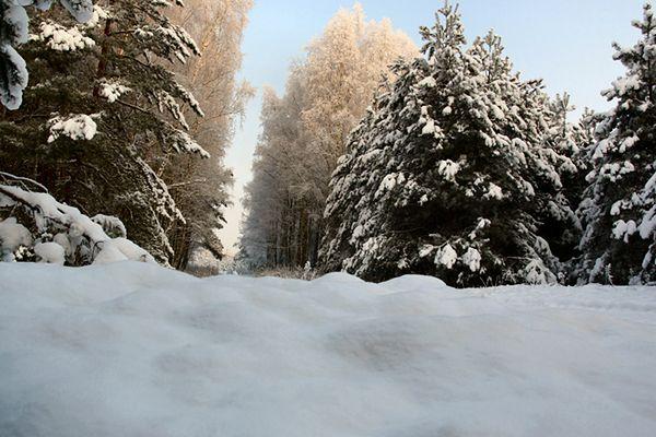Mniej śniegu oznacza szkody dla ekosystemów
