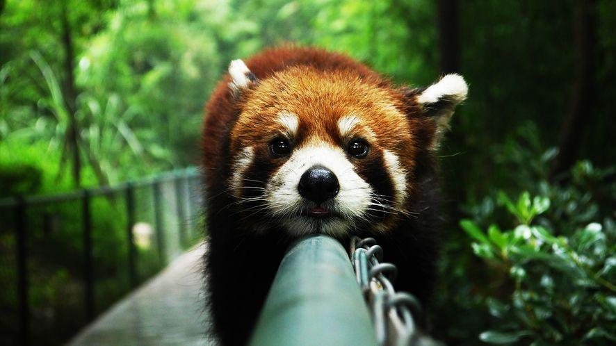 Mozilla z bezpieczeństwem się nie śpieszy, z reklamami i owszem