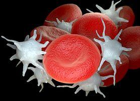Trombocyty – charakterystyka, rola w organizmie, wskazania do badań, nadpłytkowość, małopłytkowość