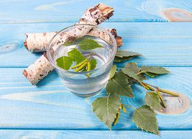 Brzoza - właściwości i napar z liści brzozy, sok z brzozy