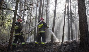Strażacy znaleźli zwęglone zwłoki w aucie w lesie