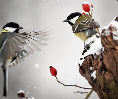Ptaki to nie śmietnik! Dokarmiajmy je z głową