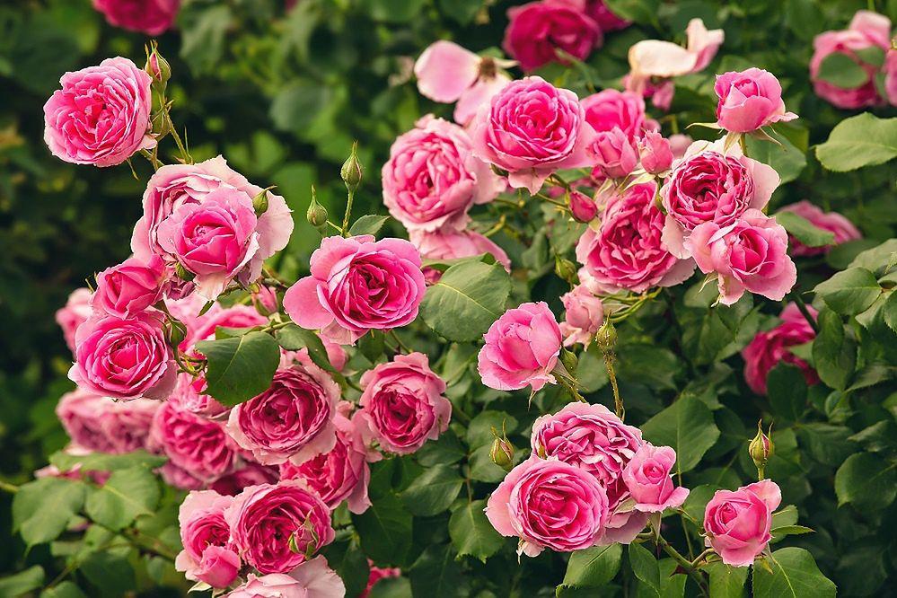 Bukiet kwiatów dla nauczyciela