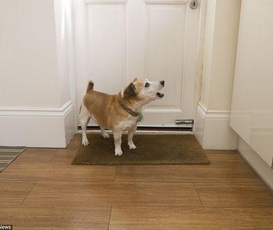 Szczekające psy podczas nieobecność właściciela to zmora sąsiadów