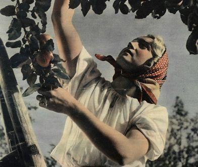 Na przedwojennych zdjęciach widzimy i chłopki i robotnice, które nawet jeśli są ubrane biednie, zawsze mają starannie ułożone włosy