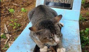 Kot spędził rok przy grobie swojego właściciela