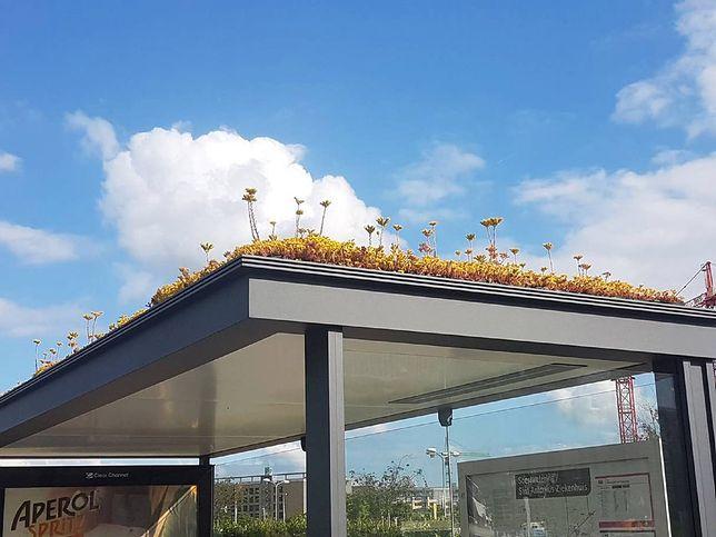 """Takie """"roślinne przystanki"""" przydałyby się również w Polsce"""