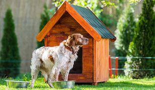 Jak samodzielnie zbudować budę dla psa?