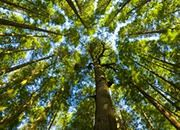 Szyszko: 4 euro to koszt pochłonięcia tony CO2 przez lasy