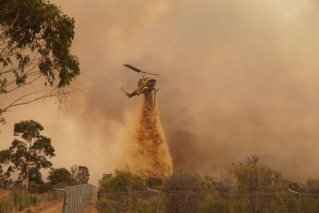 Ogromny pożar na przedmieściach Perth w Australii