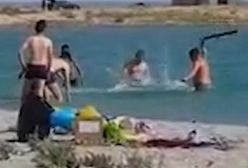 Kazachstan. Brutalni turyści okładali kijami fokę