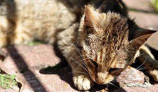 Kot oblany kwasem w ogrodzie botanicznym