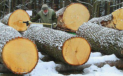 Projekt ws. Lasów Państwowych poprą SLD, TR i może SP; PiS przeciw