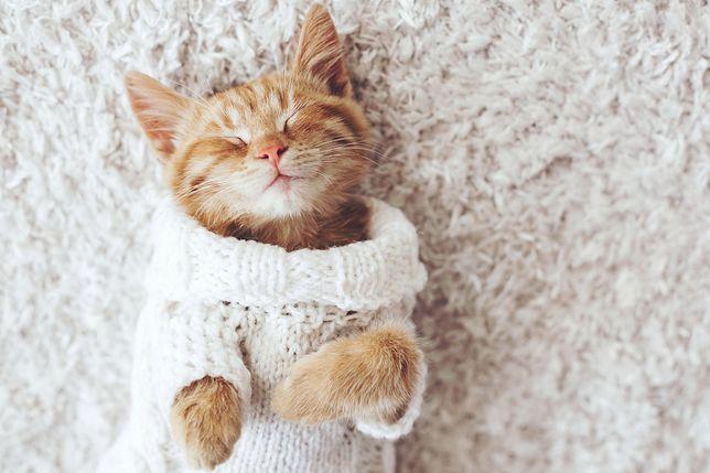 Rzuć pracę i chodź przytulać koty. Teraz możesz na tym zarobić!
