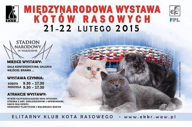 Międzynarodowa Wystawa Kotów Rasowych na Narodowym