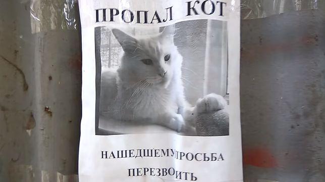 """Kot """"podąża głową"""" za przechodniami"""