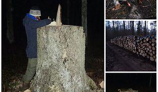 Ekolodzy przedstawili zdjęcia z wycinki drzew