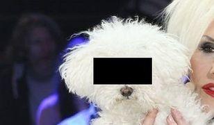 Umorzono sprawę narkotyków dla psa Kory