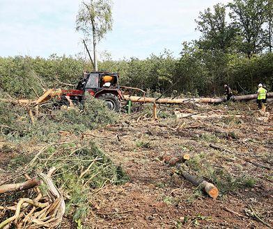 Wielkopolska. Operator ciągnika przygnieciony przez drzewo.