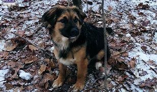 Ten pies prawie zamarzł. Policja sprawdza, kto porzucił go w lesie
