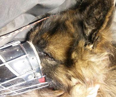 Ksiądz brutalnie skatował psa. Wieś bała się interwencji