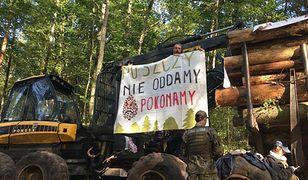 Ekolodzy wciąż bronią Puszczy Białowieskiej