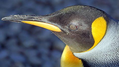 Linux 4.13 na czas – mimo kamienia nerkowego Linusa. Sprawdź nowości!
