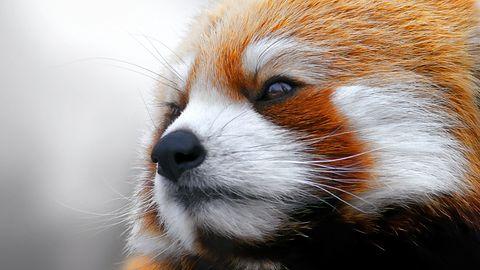 Mozilla prezentuje swoje pomysły na Internet Rzeczy spod znaku Firefox OS-a