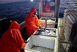 Na dnie Bałtyku tyka ekologiczna bomba. Coraz więcej ryb jest owrzodzonych