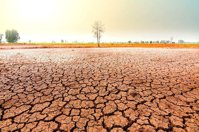 Ekologiczny koniec świata? Naukowcy ostrzegają. To jedyne wyjście, by uniknąć katastrofy