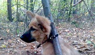 Udało się znaleźć mężczyznę, który przywiązał szczeniaka do drzewa i zostawił.