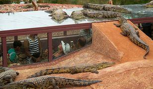 Crocoparc to jedna z największych atrakcji turystycznych Agadiru