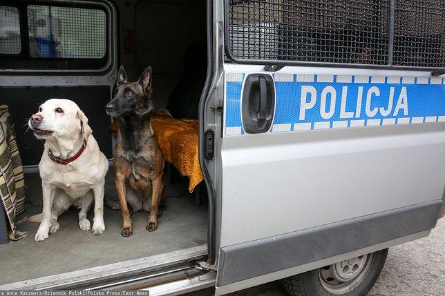 W polskiej policji służy około tysiąc psów. Pracują podczas patroli, zabezpieczeniu meczów czy akcji poszukiwania narkotyków i materiałów wybuchowych