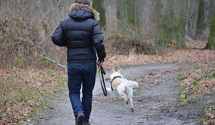 Mandaty dla właścicieli psów. Entuzjaści czworonogów mogą mieć problem