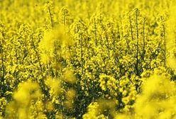 NIK: biopaliwa wykorzystywane na niewielką skalę