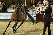 Totalizator Sportowy nadal będzie organizował wyścigi konne