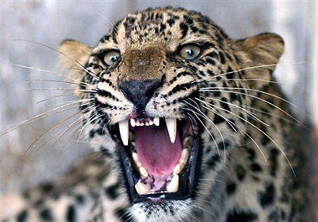 Dzikie zwierzę w ambasadzie