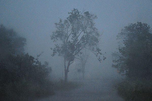 Po burzach setki połamanych drzew, zalane piwnice; ponad 1300 interwencji