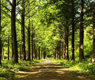 Lasy w Polsce dostępne są dla wszystkich. Wyjątkiem są sytuacje kiedy nadleśnictwo ogłasza zakaz wstępu